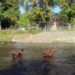 Mädchen voran ins Wasser