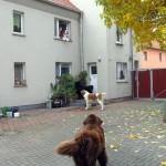 Oma Waltraud mit Plüschhund am Fenster