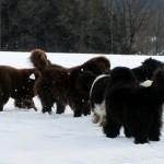 Glückliche Neufis im Schnee