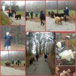 So wollen wir auch im neuen Jahr das Zusammensein in der Landesgruppe und mit unseren Vierbeinern genießen.